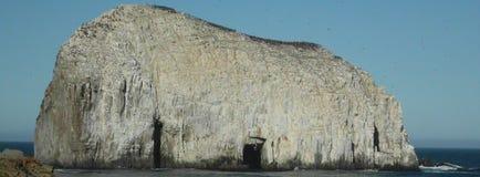 Oscile en la costa de la constitución rodeada por los pájaros, chile Imagen de archivo