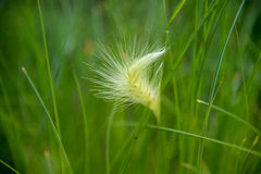 Oscile la forma del corazón en un campo de hierbas verdes Imagenes de archivo