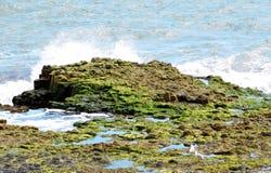 Oscilla la bassa marea Fotografia Stock Libera da Diritti