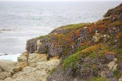 Oscilla la costa del Pacifico Immagine Stock Libera da Diritti