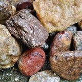 Oscilla la natura di pietra dei ciottoli della raccolta Immagini Stock
