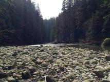 Oscilla la riva del fiume Fotografie Stock