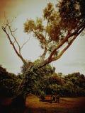 Oscillation d'arbre au parc de manière de coucher du soleil images libres de droits