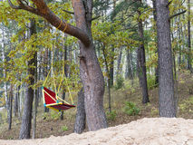 Oscillation dans la forêt Photo libre de droits
