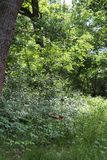 Oscillation dans un Forrest Images libres de droits