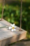 Oscillation de fleur de source Images stock
