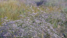 Oscillazione dei fiori del prato dal vento archivi video