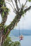 Oscillazione dell'albero Fotografie Stock