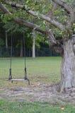 Oscillazione dell'albero in parco fotografie stock libere da diritti