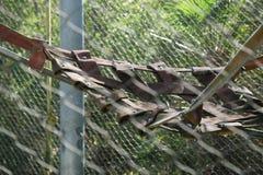 Oscillazione dell'orangutan Fotografia Stock Libera da Diritti