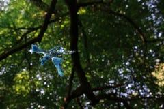 Oscillazione della corda da un albero Immagine Stock