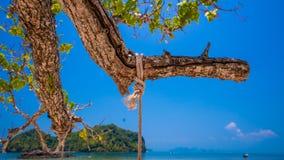 Oscillazione della corda sull'albero con la vista del mare fotografie stock