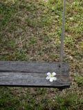 Oscillazione di legno con la plumeria bianca Immagini Stock