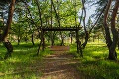 Oscillazione di legno in un boschetto degli alberi sempreverdi Fotografia Stock Libera da Diritti