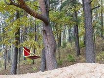 Oscillazione in foresta Fotografia Stock Libera da Diritti