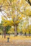 Oscillazioni in un parco con le foglie cadute gialle degli alberi fotografia stock