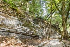 Oscilli la frana che si è presentata 20 milione anni fa dagli errori tettonici sul territorio del boschetto del legno di bosso &  Fotografie Stock