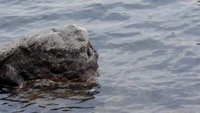 Oscilli nell'acqua da un bacino del cottage video d archivio