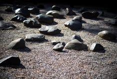 Oscilli o giardino di pietra con le grandi e pietre medie di dimensione Fotografie Stock