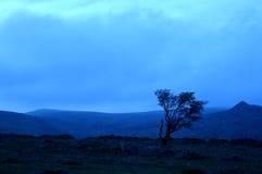 Oscuridad azul Fotos de archivo