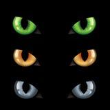 Oscuridad de los ojos de gato n Foto de archivo libre de regalías