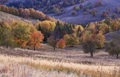 Oscuridad hermosa del otoño imagen de archivo libre de regalías