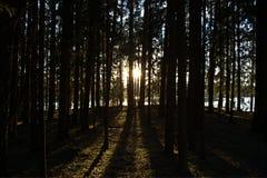 Oscuridad y luz Imagen de archivo