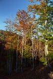 Oscuro y ligero de otoño en bosque Imágenes de archivo libres de regalías