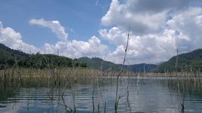 Osedda Thailand Arkivfoton