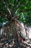 Osedda Thailand, Ang Thong Province Wat Sangkratai Royaltyfria Foton