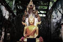 Osedda Thailand, fördärvar av den gamla templet med ett Bodhi träd rotar Royaltyfri Fotografi
