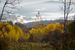 Osennee morning in a mountain forest. Autumn morning in a mountain forest. Caucasus, Russia Royalty Free Stock Photo