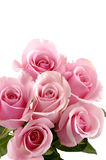 Oses. Bouquet six roses on white background Royalty Free Stock Images