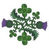 Oset i koniczyna Symbole Irlandia i Szkocja Kręcona koniczyna i oset ilustracja wektor