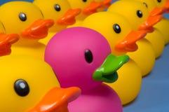 Osez être différent - les canards en caoutchouc sur le bleu Photo libre de droits