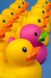Osez être différent - les canards en caoutchouc sur le bleu Photos libres de droits