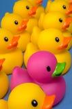 Osez être différent - les canards en caoutchouc sur le bleu Images stock