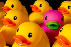 Osez être différent - les canards en caoutchouc sur le noir Photos stock