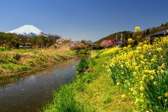 Oshino Hakkai village with sakura and mt. Fuji. Oshino Hakkai village with cherry blossom or Sakura  along canal with mount Fujisan or Fuji at spring in Stock Photos