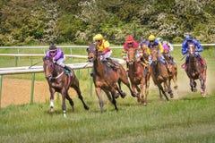 Osiem dżokejów na horseback Ścigający się 22 2015 Sierpień Magdeburskiego, Ger Obrazy Royalty Free