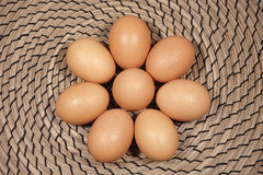 Osiem kurczaków jajek na łozinowym tle Obrazy Royalty Free