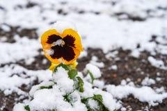 Osierocony śnieg Fotografia Royalty Free
