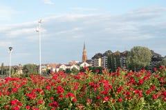 Osijek Kroatiensikt på kyrkligt torn och skyskrapa med röda rosor Royaltyfria Foton
