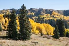 Osika i evergreens w południowym Kolorado Zdjęcia Royalty Free