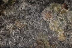 Osika liście marznący w wodzie Obrazy Royalty Free