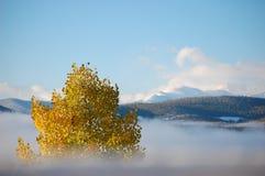 Osika nad mgła Zdjęcia Stock