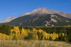 Osikowi drzewa w jesieni Zdjęcia Stock