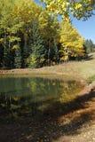 osikowi jeziorni drzewa obraz stock
