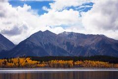 Osikowi odbicia w górze Elbert Forebay, Bliźniaczy jeziora, Kolorado Fotografia Royalty Free