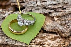 osikowi pierścionki Zdjęcie Royalty Free